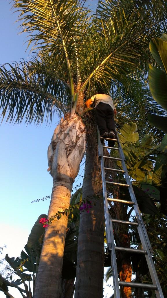 San Diego Holiday Light Installation