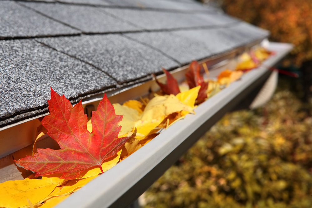 San Diego Gutter Cleaning
